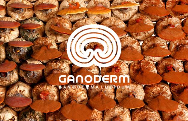 فروش گانودرما