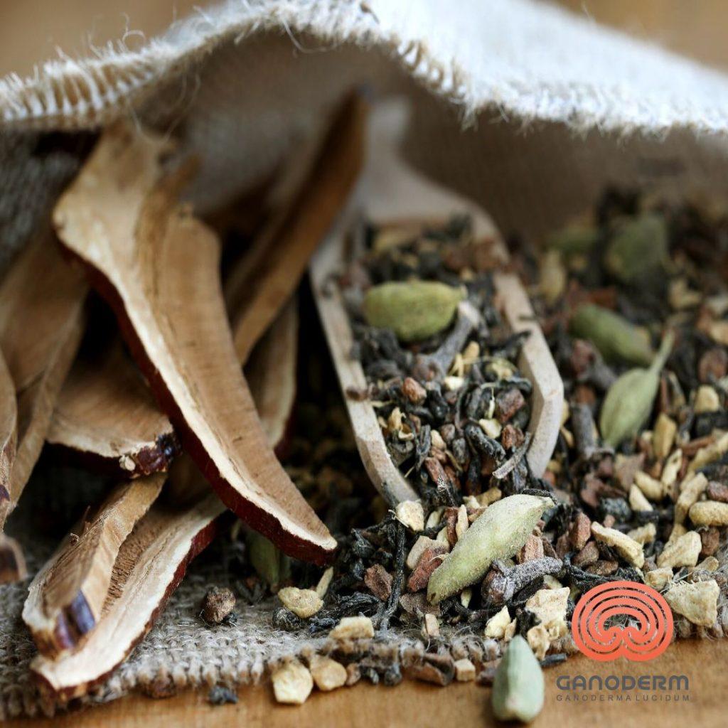چای-گانودرما