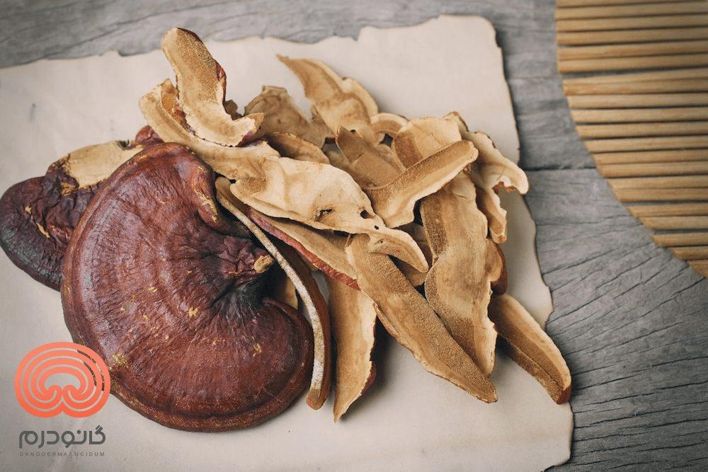گانودرما - قارچ ریشی